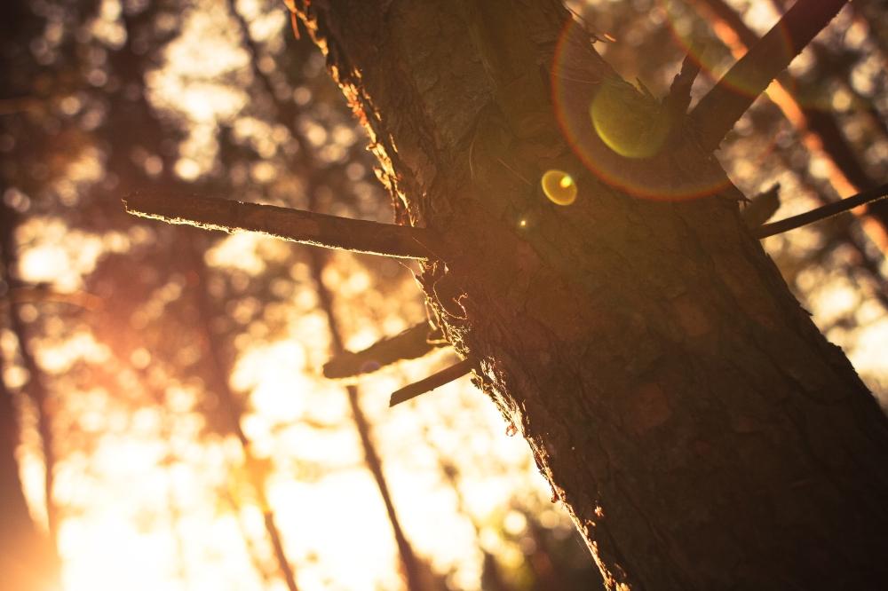 Sunlights vs. Tree
