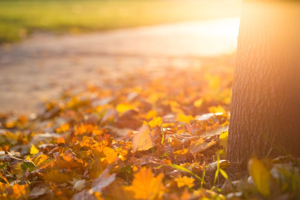 Fall Autumn Leaves on the Ground_preview